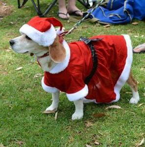 Xmas Beagle